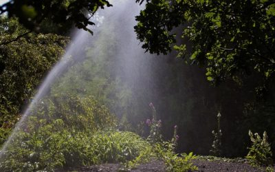 Choosing the Right Sprinkler Head: Sprays vs. Rotors
